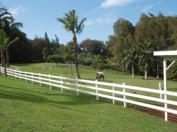 Horses at Upcountry Listing near Hawi