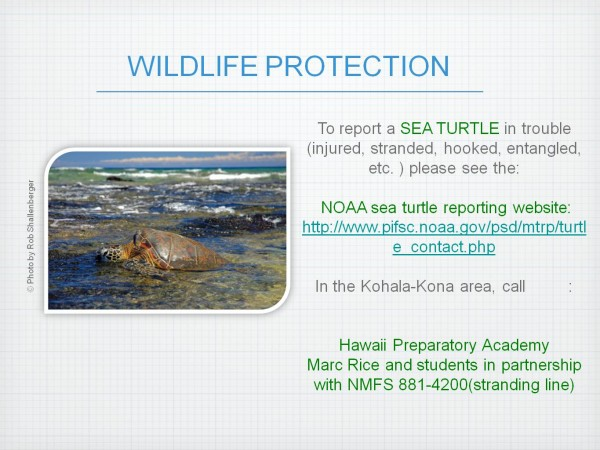 Puako MW Presentation_wildlife protection pic
