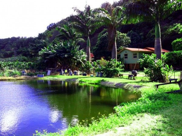 Maliko Farm