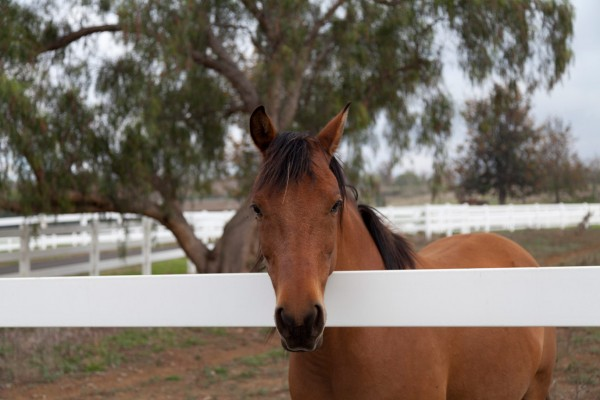 Puu Lani Ranch Stables & Paddocks Available