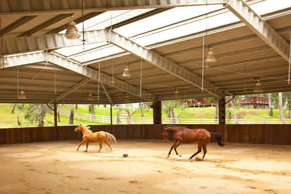 Big Island equestrian horse-breeding estate for sale