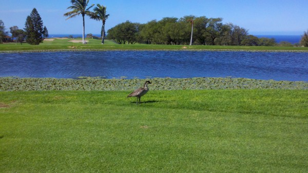 http://www.hawaiilife.com/articles/2012/11/price-reduction-pointe-at-waikoloa/