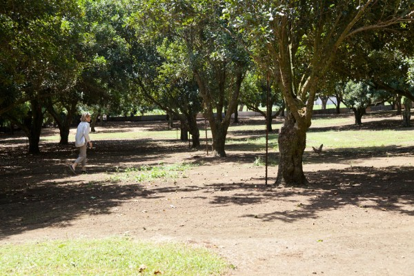 Hawi home for sale with mac nut orchard