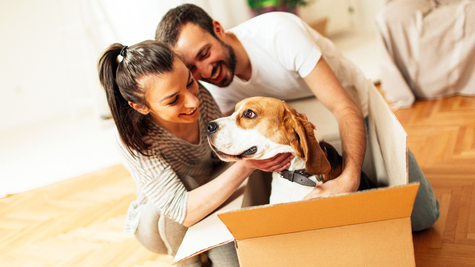 Moving Pets To Hawaii Frequently Asked Questions Faq