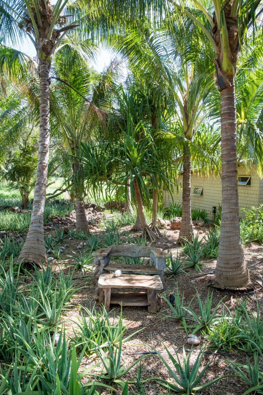 Rustic bench in palm grove