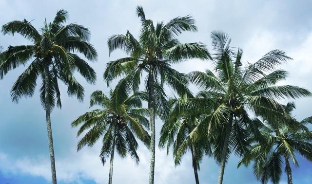 Huelo, Haiku Maui Hawaii