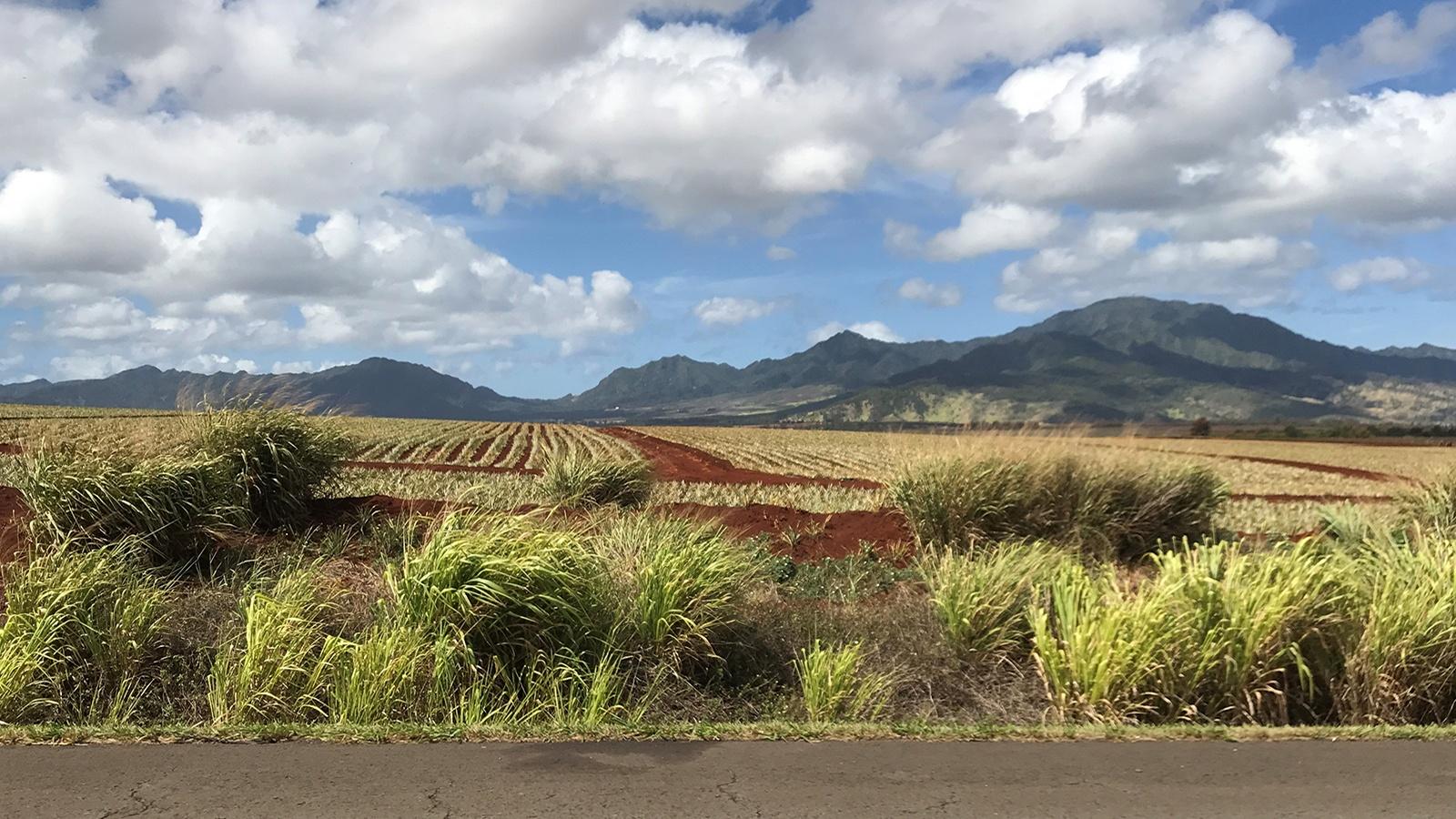 Off the grid Hawaii
