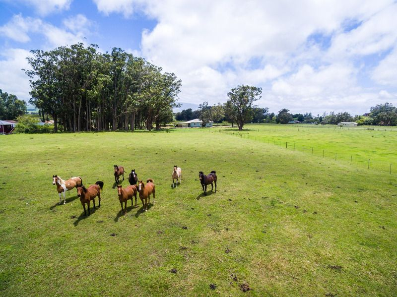 Prime Six Acre Parcel Available In Waimea Hawaii Real