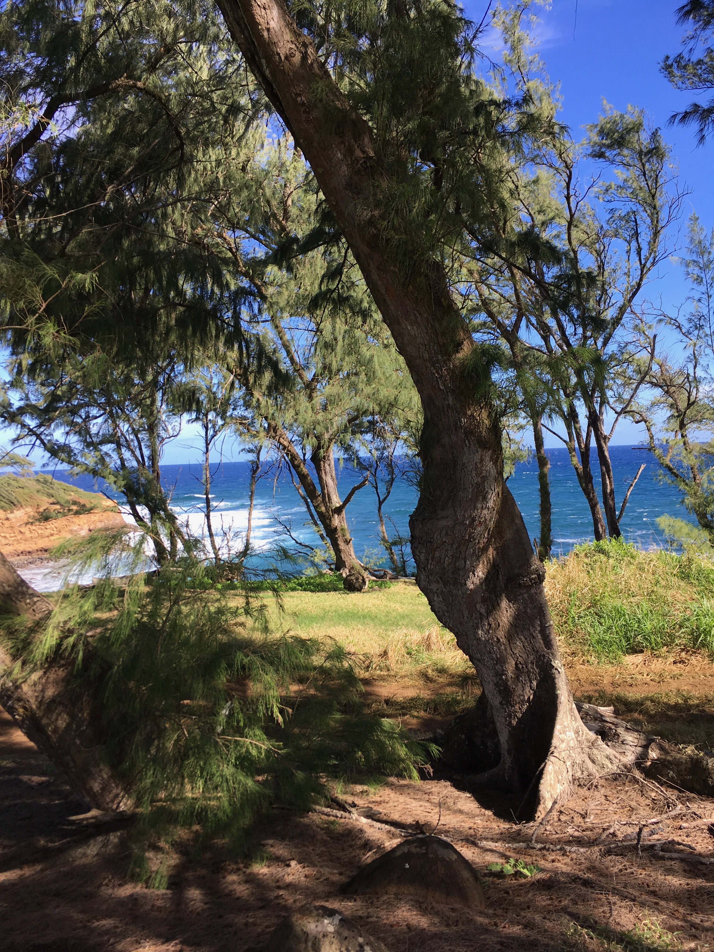 Almost oceanfront listing in North Kohala