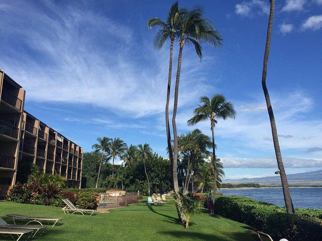 Maui Banyans in Maalaea