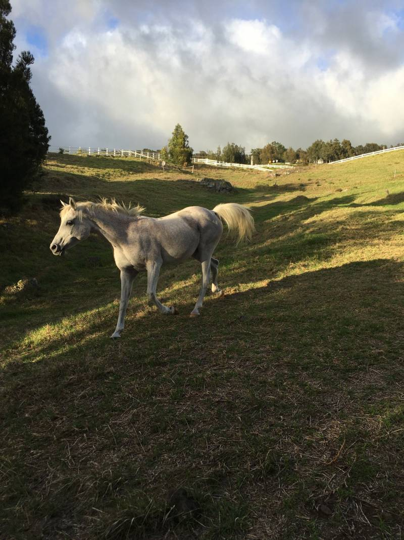 Horses at Kohala Ranch