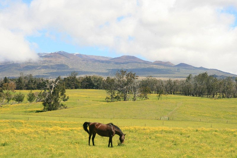 Waikii Ranch - Choose a Home with Guest House and Barn - Hawaii Real