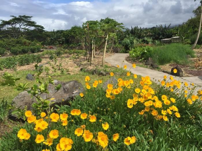 Colorful gardens at 51 W. Waipio Rd.