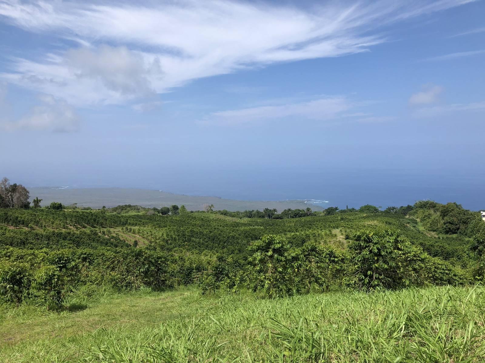 Coffee Farm in Kealakekua Hawaii