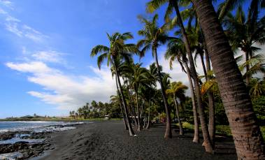 Black sand beach, tall palms and blue skies