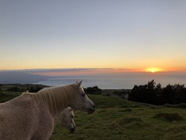 Horses at sunset in Kohala Ranch Summit