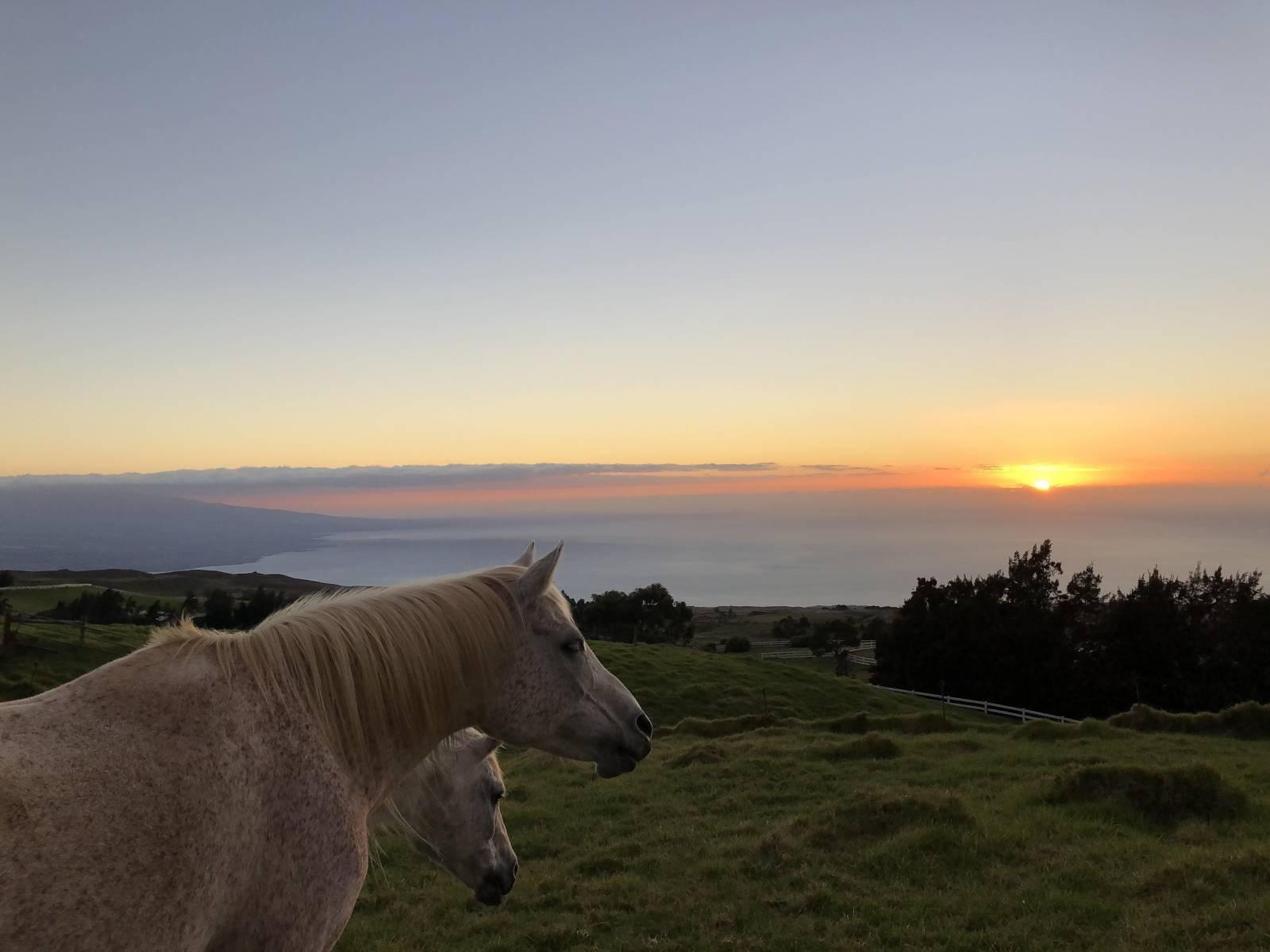 Horses at sunset in Kohala Ranch Summit