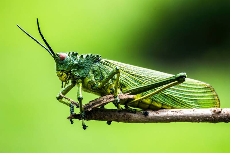 green insect on branch