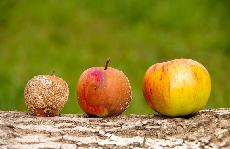 Three apples on table