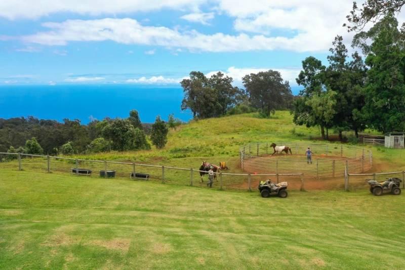 Kukaiau Ranch for sale Hamakua Coast