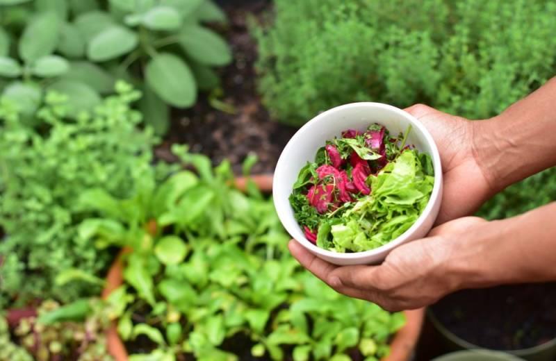 gardens growing at hokulia