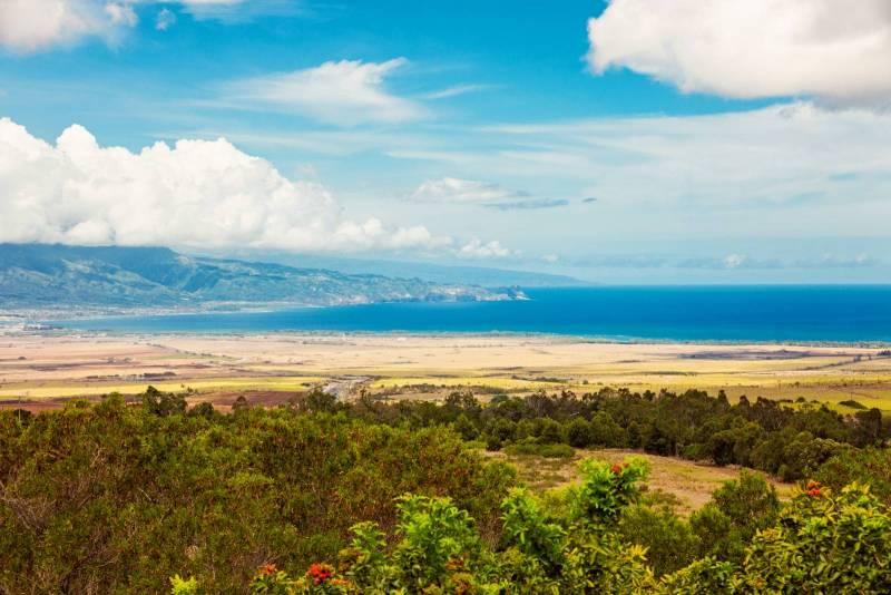 65 Piimauna View