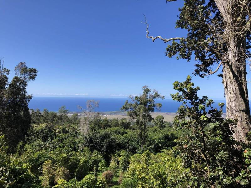 coffee plants, ohia trees and ocean views