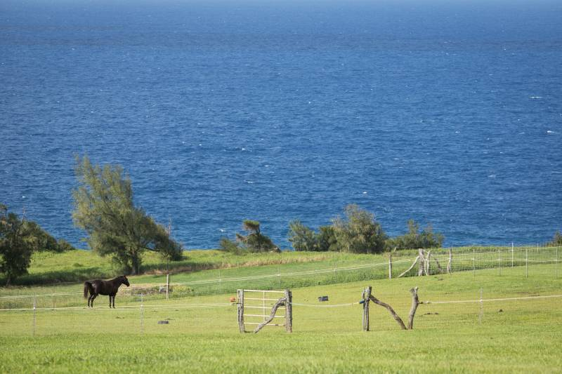 oceanfront horse property on Big Island Hawaii
