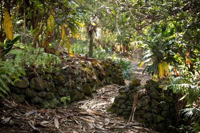 Kona Field System remnant walls