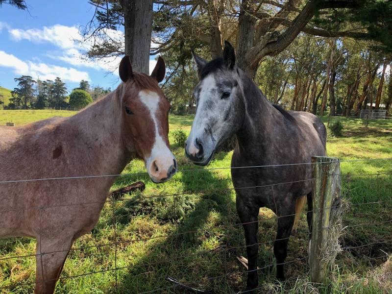 Horses at Waikii Ranch
