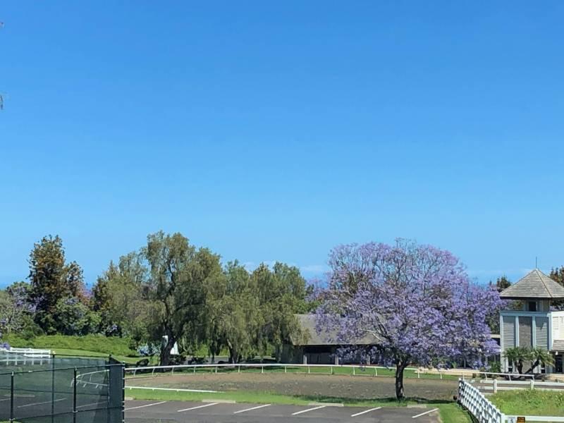 Jacaranda at Puu Lani Ranch