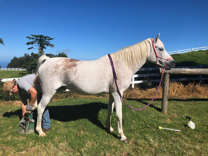 Farrier during social distancing