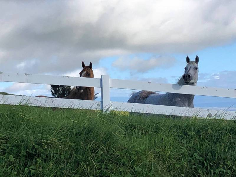 Horses at Kohala Ranch