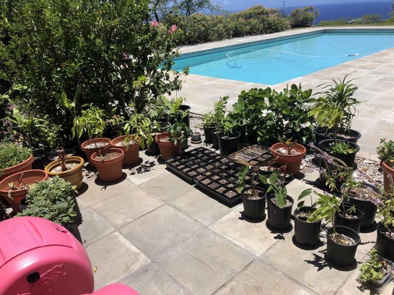 Kohala Ranch Covid-19 Garden