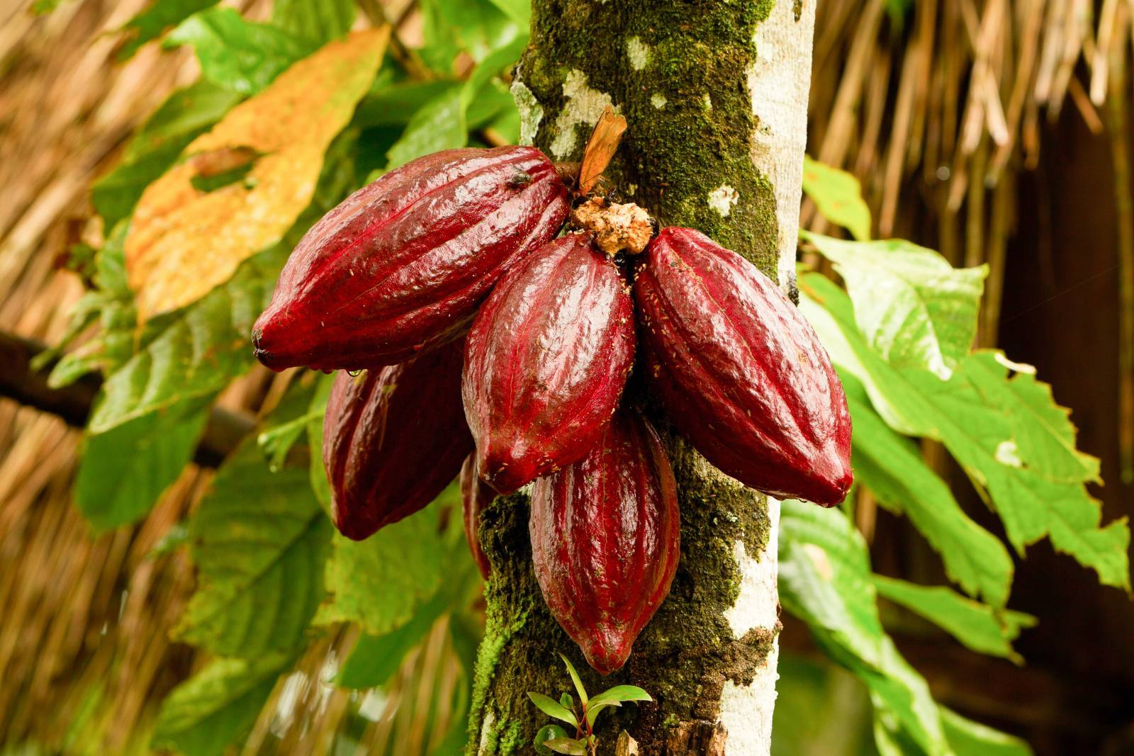 hawaii life charitable fund chocolate fundraiser
