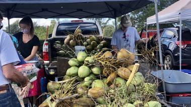 Maui Coconuts