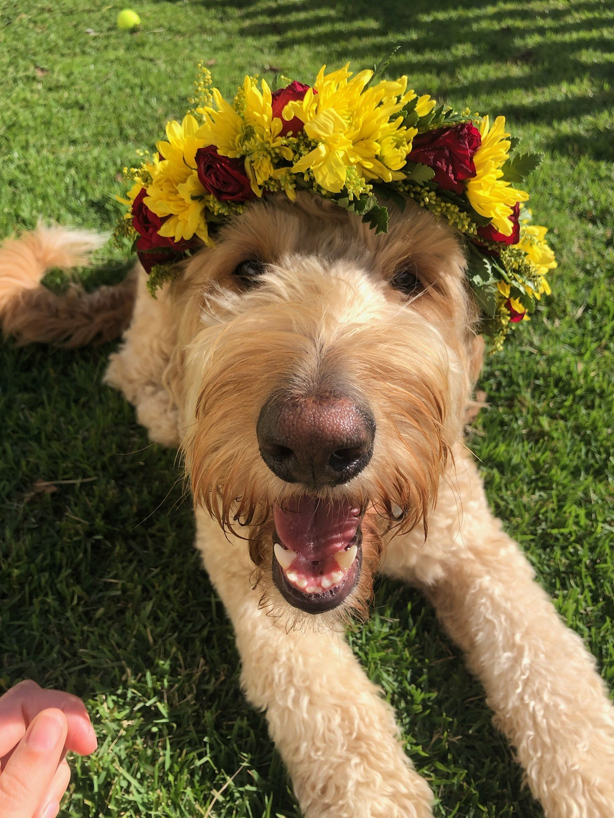 dog with flower crown in hawaii