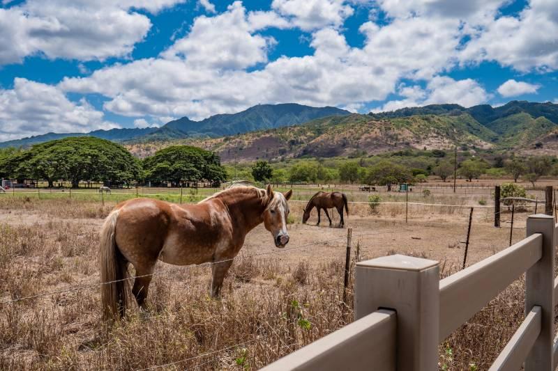 Horse Boarding at Dillingham Ranch
