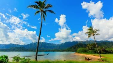 palm tree over hawaii beach
