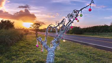 Christmas Tree by the roadside at sunset in hawaii