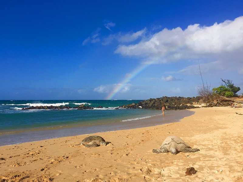 beautiful beach in paia maui