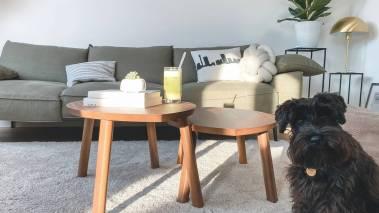 black dog in living room of Oahu condo