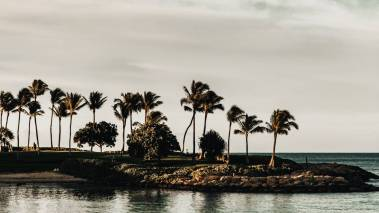 palm trees on oahu