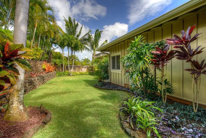 grassy, tropical backyard
