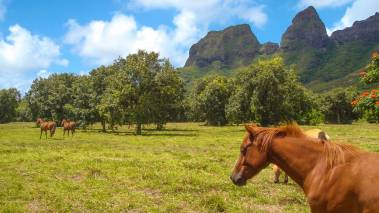living in the country in kauai