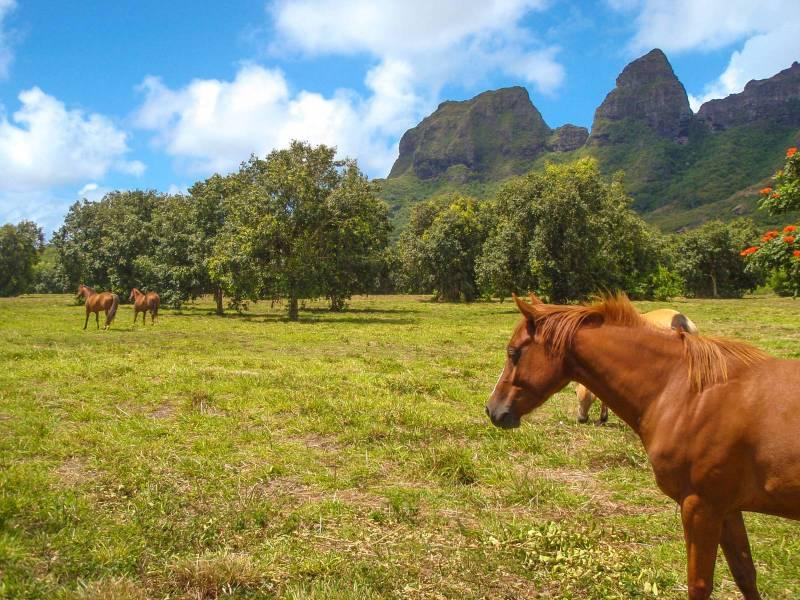 Kalalea Plantation, Kauai