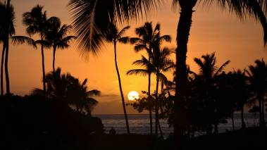 palm trees frame oahu sunset