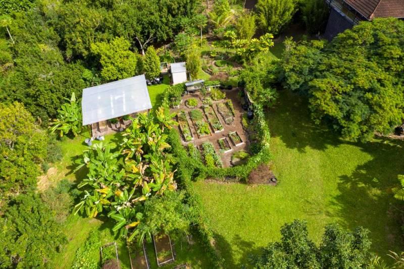 Main garden area of the Honaunau Wellness Farm