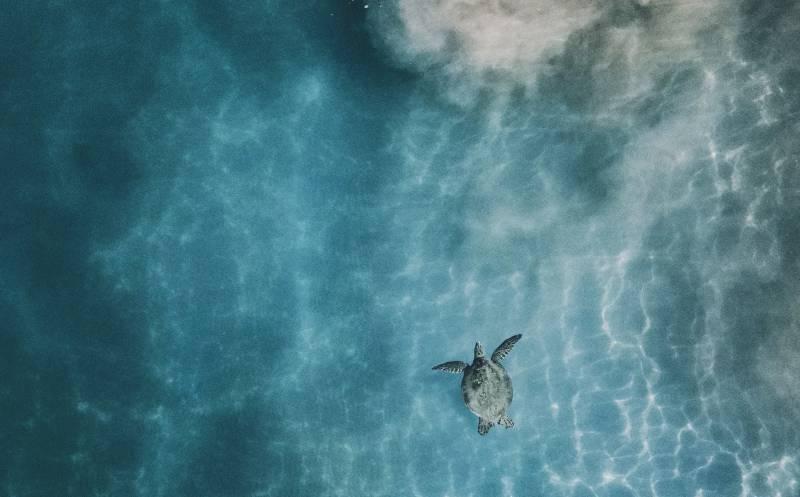 sea turtle in hawaii ocean