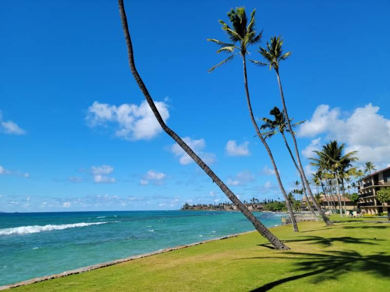 Oceanfront lawn